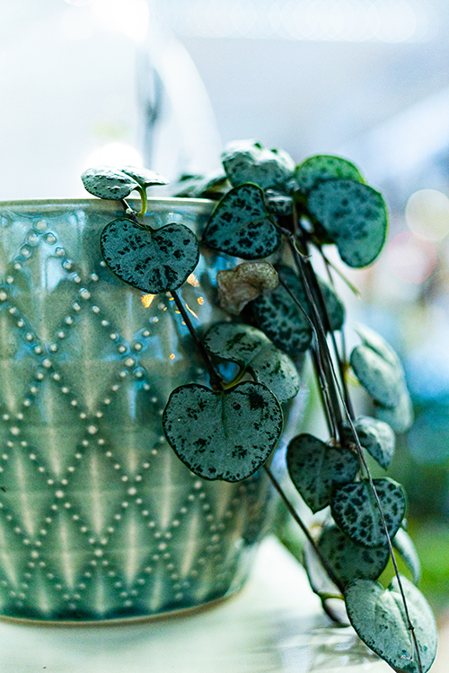 viherkasvi vihreässä ruukussa